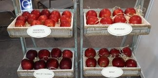 Odmiany jabłoni – oferta szkółek drzew owocowych podczas TSW 2019