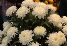 Kwiaty cięte w roli głównej (cz. II)