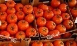 Odmiany pomidorów na nowy sezon