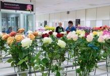 Coraz mniej produkujemy ciętych róż w Europie