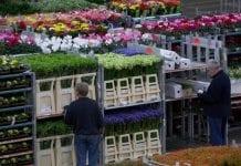 Brytyjskie i holenderskie kwiaciarstwo ucierpią przez Brexit?