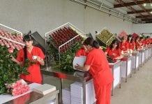 W Armenii rozwijają się szklarnie