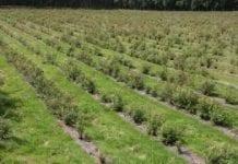 Sejm przyjął poprawki Senatu do ustawy o rolnictwie ekologicznym