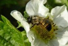 Budujemy populację owadów zapylających® – rusza kolejna edycja