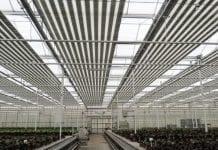 Brytyjskie ogrodnictwo może się załamać bez pracowników z UE