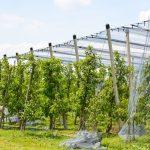Ukraina: powstaje służba doradcza dla sadowników