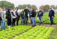 Warzywnicze pokazy Enza Zaden w Holandii