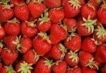 Ważne problemy producentów owoców jagodowych