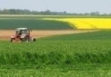Grunty rolne zyskują na wartości