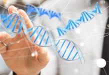 Sprawne tasowanie roślinnych genów szansą na nowe odmiany