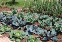 Rośliny uprawiane w miastach nie muszą być groźne dla zdrowia