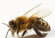 Pszczoły na dachu – hotelowy pomysł na ekologię