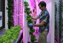 Kontenery uprawowe zmieniają produkcję warzyw