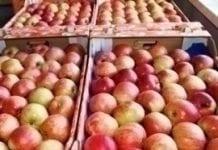 Rekordowy import jabłek