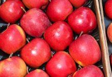 Jabłka dla alergików