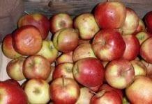 Trzeba skontrolować komory z jabłkami!