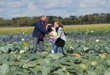 Dni warzyw po holendersku