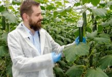 Preparaty biologiczne w ochronie ogórka