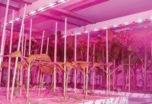 LED w doświetlaniu roślin