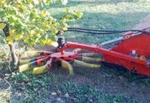 Mechaniczny zbiór owoców leszczyny
