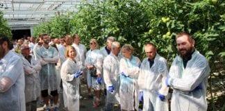 Pomidorowy Dzień Otwarty koło Pleszewa