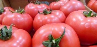 Pomidory malinowe – hity i nowości