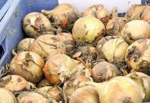W Delhi brakuje cebuli