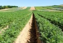 Zaplanowana produkcja warzyw