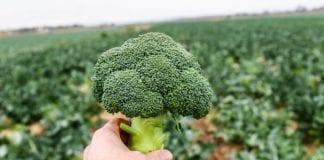 Brokuły po hiszpańsku