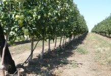 Modernizacja gospodarstw rolnych – od dziś ruszają nabory