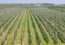 Nowe technologie w agrotechnice i przechowywaniu owoców