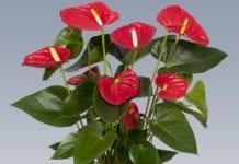 Kwiaciarskie zapowiedzi na Horti Fair 2012
