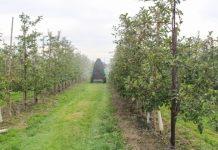Uzupełnienie Programu Ochrony Roślin Sadowniczych 2018