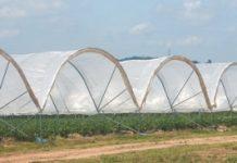 Osłony na plantacje owoców jagodowych