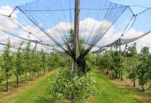 """""""Program Ochrony Roślin Sadowniczych"""" – zmiany w 2018 roku"""