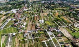 Szkółki nową atrakcją turystyczną Toskanii (cz. I)