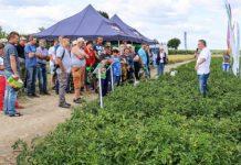 Agro Akademia BASF na pomidorowych polach