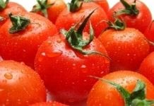 Zima w Europie sprzyja kanaryjskim pomidorom