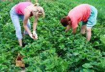 Składki na ubezpieczenie społeczne rolników i pomocników w III kwartale