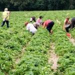 Nagonka na rolników