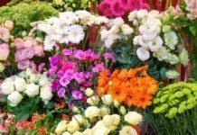 Poprawić trwałość kwiatów