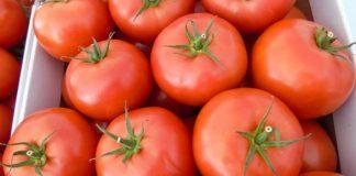 Pomidorowe premiery