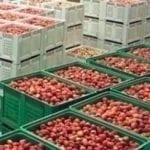 Technologie przechowywania owoców