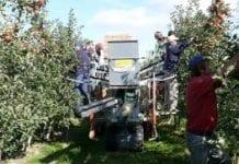 Mechanizacja zbioru owoców – jabłka i gruszki