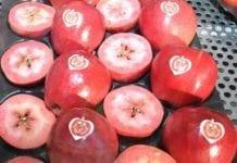 Bogatsza oferta jabłek o czerwonym miąższu