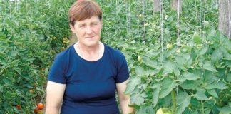 Pokaz odmian pomidorów w Rzeczycy