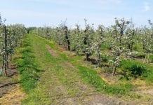 Wiosenna ocena stanu upraw ogrodniczych