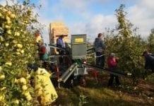 Kłopoty wizowe sezonowych pracowników z Ukrainy