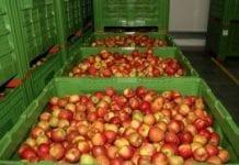 Przechowywanie jabłek w innowacyjnych technologiach