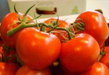 Pomidory ze stacji badawczej